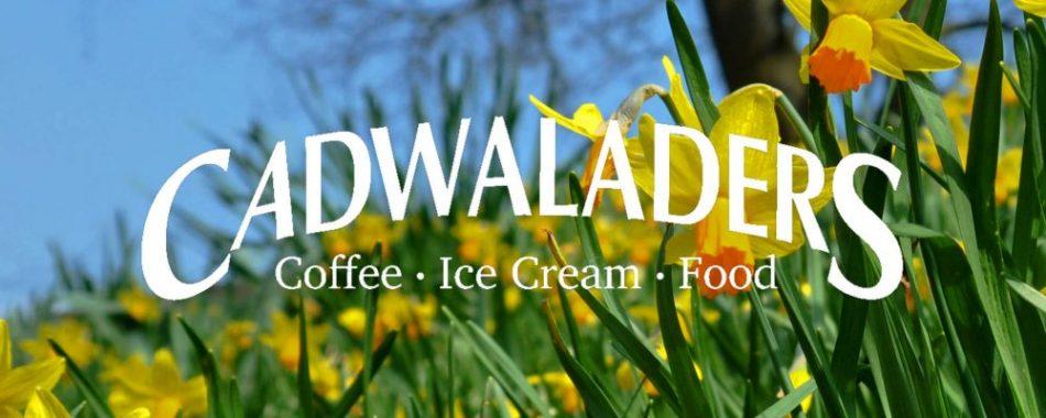 cadwaladers daffodils